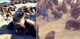 Sea Lion Received Some Much Needed Help From This Heroic Man