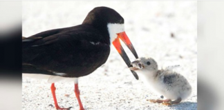 Photographer Spots Mother Bird Giving The Saddest Thing To Her Chick