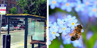Holland Turns Hundreds of Bus Stops into Bee Stops to Care for the Honeybees