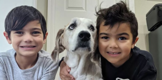 Family Treat Terminally Ill Dog To A Dream Weekend Before He Dies