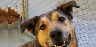 Sad Old Dog Can't Be Happier When He Gets Adopted After 2,381 Days of Rejection