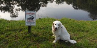75-Year-Old Man Fights Off Alligator To Save His Dog's Life