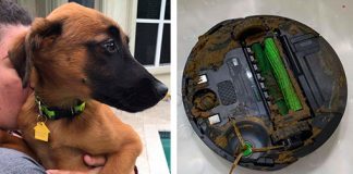 Man's Roomba Runs Over A Pile Of Dog Poop And Smears It Everywhere