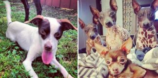 Woman Saves 20 Special Needs Dogs, And Still Wants To Rescue More