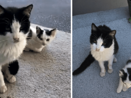 Kind Couple Fed A Stray Cat, And Then She Returned With Her Cute Kitten
