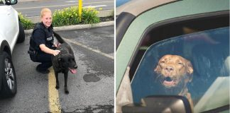 New Legislation Allows Firefighters & EMS To Save Pets From Hot Cars Without Penalty