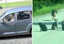 Heartless Woman Dumps 11 Pets In The Middle Of The Road And Drives Off