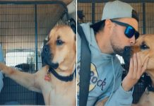 Rescue Dog Falls In Love With New Dad And Refuses To Let Go Of His Hand