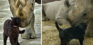Brave Cat Loves To Cuddle With Endangered Black Rhino In Sweet Viral Video