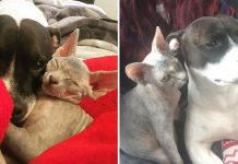One-Eyed Rescue Cat Makes Friend With Bull Terrier And Now The Adorable Duo Becomes Inseparable