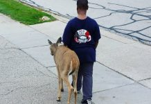 Kind-Hearted Boy Walks With Blind Deer Every Day Before School, And The Reason Will Make You Cry