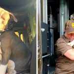 Pit Bull Cries Like A Little Baby After Mom's Death And Begs UPS Driver To Give Him A Home
