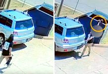 Surveillance Cameras Caught Woman Swinging Tiny Puppy By The Neck, Throwing Him In The Dumpster And Running Off