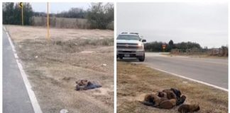 Eight Newborn Puppies Thrown From A Car Window By A Monster