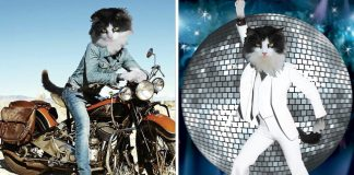 Owners Use MS Paint To Incorporate Their Rescue Cats Into Popular Photos And Artwork