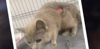 Poor Cat Makes A Remarkable Recovery After Being Shot By Arrow