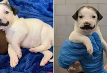 Rescue Puppy Born With The Cutest Handlebar Mustache Goes Viral On Social Media