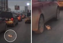 Tiny Kitten Narrowly Escapes Being Crushed By Car On Busy Road