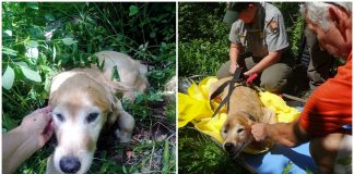 Lost Dog Spotted Among The Forest Trees After He Had Been Missing For 11 Days