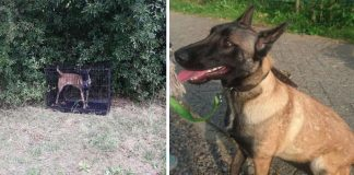 Dog Found Locked In A Cage With Nothing Near A Carpool Pickup Area in the Netherlands