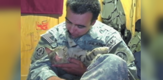 U.S. Soldier Goes Above and Beyond To Save Stray Cat