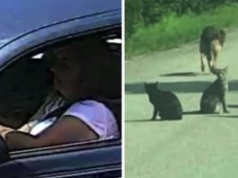 After Shelter Turns Her Away, Woman Drops 11 Animals In The Middle Of The Road And Drives Off