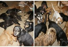 Woman Takes Nearly 100 Stray Dogs Into Her Home As Hurricane Dorian Rages Outside