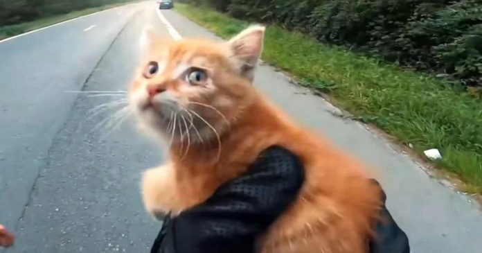 Motorcyclist Saves Tiny Kitten From The Middle Of The Road