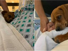 Dog Comforts Sick Dad And Stays With Him Until The Very End