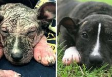 Rescue Dog Beats All The Odds To Survive Thanks To Her Wonderful Foster Mom