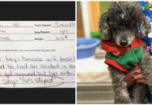 "18-Year-Old Dog Was Abandoned At Vet Clinic For Being ""Stupid"""