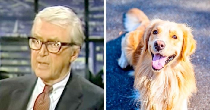 Jimmy Stewart's Poem About His Dead Dog Touched Us To The Core