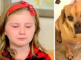 Girl Who Had Brain Tumor Is Begging The Public To Help Her Find Her Lost Service Dog
