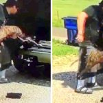 Nasty Man Grabs 3 Dogs By Their Tail And Flings Them Out Of Car Like Trash On Rural Road
