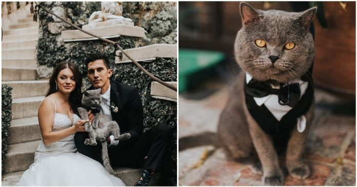 Couple Celebrates Their Wedding With A Cat Groomsman And It Is Absolutely Adorable!