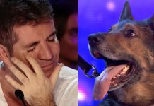 Police Dog With Troubled Past Makes Judge Simon Cowell Cry