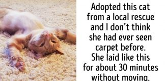 These Photos Will Show You How Priceless It Is To Give Homeless Animals A New Life
