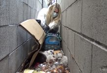 Rescuers Save Kittens Found In A In A Pile Of Trash And Help Them Find Forever Homes