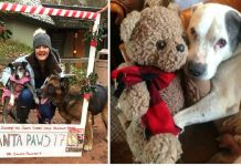 Nurse Creates Hospice For Unwanted Dogs She Adopts