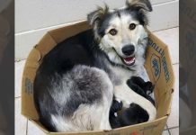 Mama Dog Found Abandoned And Sealed In A Box Along With Her 9 Puppies