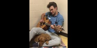 Scared Dog Is Serenaded And Calmed By Guitar-Playing Vet Before Her Surgery