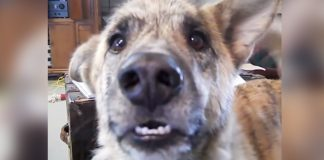 Dad Tells Dog He Gave His Treats To The Cat. People Can't Stop Laughing At Dog's Reaction