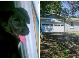 Black Lab Lives All Alone In An Abandoned Home For Months, Officials Say They Can't Intervene