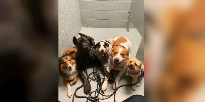 Dogs Obsessed With Their Mom So Much They Won't Let Her Go To The Bathroom Alone