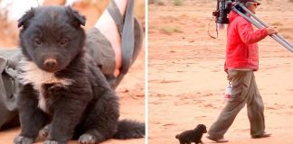 Hikers Find Hungry Puppy Dumped in the Middle of Desert and Living in a Tire