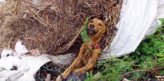 Dog Laid Dying Stuck On Side Of Road But Soon His Past Would No Longer Haunt Him