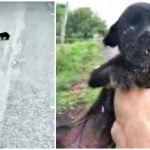 Blind Puppy Shaking From Hunger Roamed Back and Forth but People Just Passed by Her