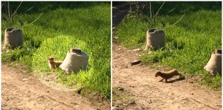 Puppy Dumped Near Dirty Road Scurries Off to a Bush and Emerges With Some Company -