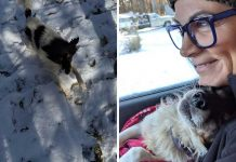 Dog Whines With Happiness After Being Saved From A Life Chained Up In The Snow