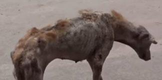 Rescue A Skelton Dog